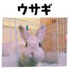 ウサギに関する豆知識・おすすめのうさぎグッズ まとめ