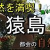 【横須賀】短時間で手軽に自然満喫!身近な自然島『猿島』 【観光】