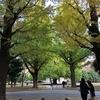 東京大学本郷キャンパスに初潜入。歴史ある空間に感動、そして素敵な和カフェも。