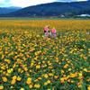 気分はお花のプリンセス☆花の都公園in山梨