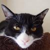 今日の黒猫モモ&白黒猫ナナの動画ー617