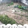 初心者向け家庭菜園の始め方。初心者かつ超ズボラな私が知った「植物」のコト。基本のキ。