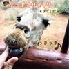 【ポレポレ旅行記】ケニアでサファリ④《ナイロビ編》