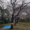 今日のつまがり 3/31(日)高根台桜まつりは今年も大盛況