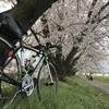 桜のAACR2019 ~当日編~。