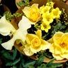 梅雨の頃の代表的な花