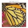 画像の超解像度化: ESPCN の pytorch 実装 / 学習