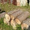薪ストーブ前史・総集編⑥「松の薪割りに大苦戦」