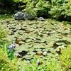 京都・金地院の小堀遠州「鶴亀の庭園」と「八窓席」その2
