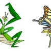 昆虫の色、昆虫の恋