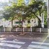 汝矣島漢江公園に行ってセグウェイに乗ってみたよ。pqrt1