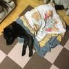 甲斐犬愛護会関西支部鑑賞会への準備〜その1 ハーブ風呂♬