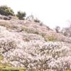 【写真】中山寺に花を撮影しに行ってきた!
