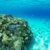 ANAインターコンチネンタル万座ビーチリゾート「サンゴ保護活動プラン」を発売