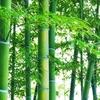 7月7日は「竹・たけのこの日」~かぐや姫は月に帰った後にどうなったか?~