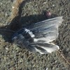 これは鳥の羽だが・・・・