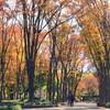 久屋大通公園の紅葉