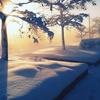 東京に大雪!積雪20cm以上も!⛄️