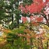 紅葉の京都 永観堂へ