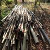 今年最後の『竹の始末』