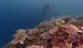 防衛局にだまされるな ! 沖縄県は絶対に防衛局にサンゴ採捕許可をだしてはいけない、その理由とは - 「移植」という名の伐採