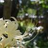 初秋に行きたい、鎌倉の「萩寺」宝戒寺の彼岸花と萩の花。