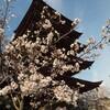 桜の季節に新しいカメラ。。。゜+.(o´∀`o)+.゜。