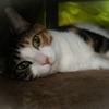 【愛猫日記】毎日アンヌさん#216