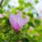 曇りの空に咲く花よ 眺めて見るは空か花枝か