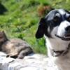 縦は犬、横は猫。