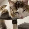 何度転んでも立ち上がるその名も「七転び八起き」!我が家のお猫様ひま日記21