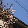 とても天気の良い連休最終日。自転車に乗らずに、歩きで鎌倉まで行ってきました。
