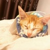 猫が足を怪我したので、ホーチミンで手術をした