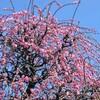 2012年3月11日の花
