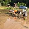 泥だらけになっても子供は大喜び