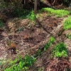 アスパラガスの収穫とジャガイモの土寄せ、枝豆の播種。あと育苗日記。