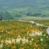 キスゲとコバイケイソウ咲き誇る雄国沼へ子連れハイキング