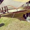 宮崎県内キャンプ場「新型コロナウイルス感染症による対応状況」(2020年05月8日時点)