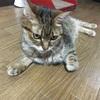 あれから1週間。私が見逃した愛猫の病気のサイン