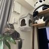 「猫の日」にコロ・さとの1年の成長を振り返る【2月22日】