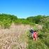子供らを連れてワラビ採りに行ってきた!そして採り頃のワラビがたくさん!