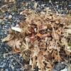 【外に目を向ける】庭の断捨離を始める理由とポイント