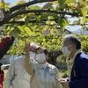 23日、大橋県議、市議団とともに市内の果樹の霜被害を調査。