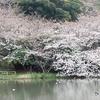 2019.3.30の三渓園の桜