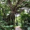 亜熱帯の森 沖縄県 「ガンガラーの谷」ツアー参加(前編)生い茂る緑、ガジュマルの木、「イナグ洞・イキガ洞」