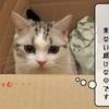 猫の道具 ~大きめダンボール箱~