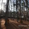 キャンピカ明野で春のキャンプ 2日目