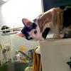ひとり暮らしの家に猫が来た もうすぐ一ヶ月