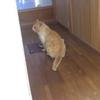 自由猫ダイちゃん、ちょっぴりすれ違う。