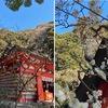 庭の梅が開花.我が家は日蔭が多く,例年他所より開花が遅れます.鎌倉の梅は多分もっと開いて,見頃間近か?と,開花状況を探索に.英勝寺;外から見ると5分咲きといったところでしょうか.今日はいつもの宝戒寺ではなく,荏柄天神を目指すことに変更.道すがらの八幡宮平家池の島に白鷺を発見.源氏池の島には大きな紅梅.遠目でも見事.荏柄天神;本堂の向かって右に紅梅.左が白梅.どちらもや英勝寺と同程度には開花. ゆったりとした気分で帰途へ.